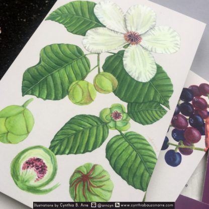philippine fore sst fruits postcard set