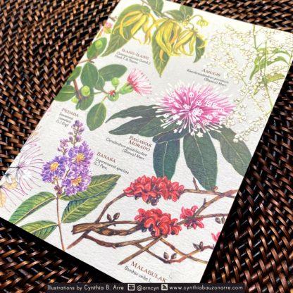 philippine native trees pocket notebook
