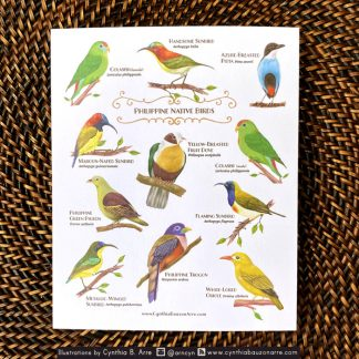 Philippine Native Birds